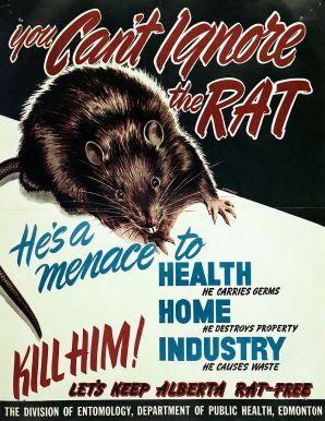Alberta_Department_of_Public_Health_Rat_Poster_(26497442131)
