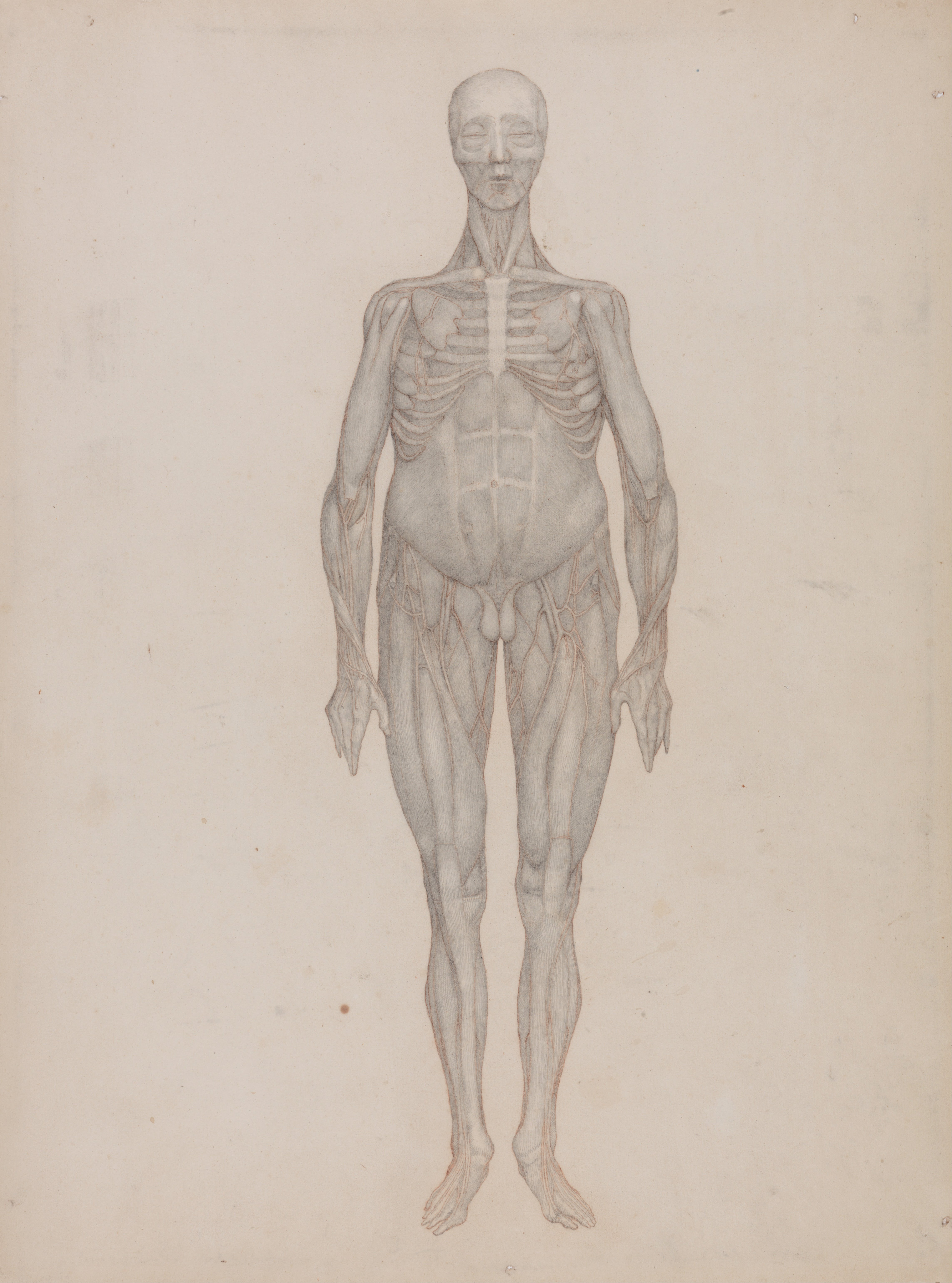 George_Stubbs_-_A_Comparative_Anatomical_Exposition_of_the_Structure_of_the_Human_Body_with_That_of_a_Tiger_and_a_Co..._-_Google_Art_Project